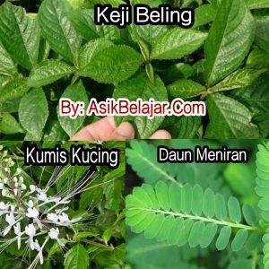 Herbal kencing batu